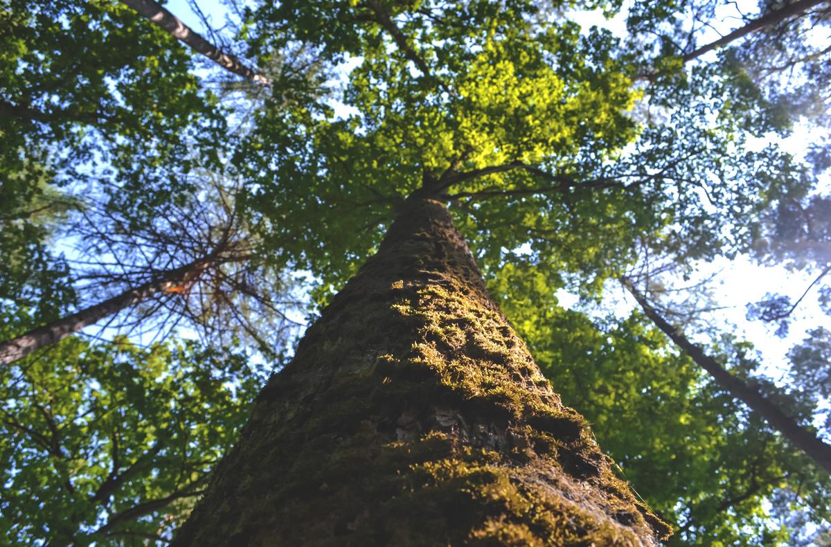 Estudio Técnico-económico Y Proyecto De District Heating De Biomasa