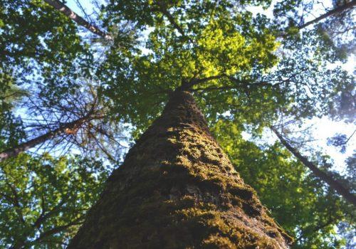 Curso Intensivo: Instalaciones De Autoconsumo Con Biomasa