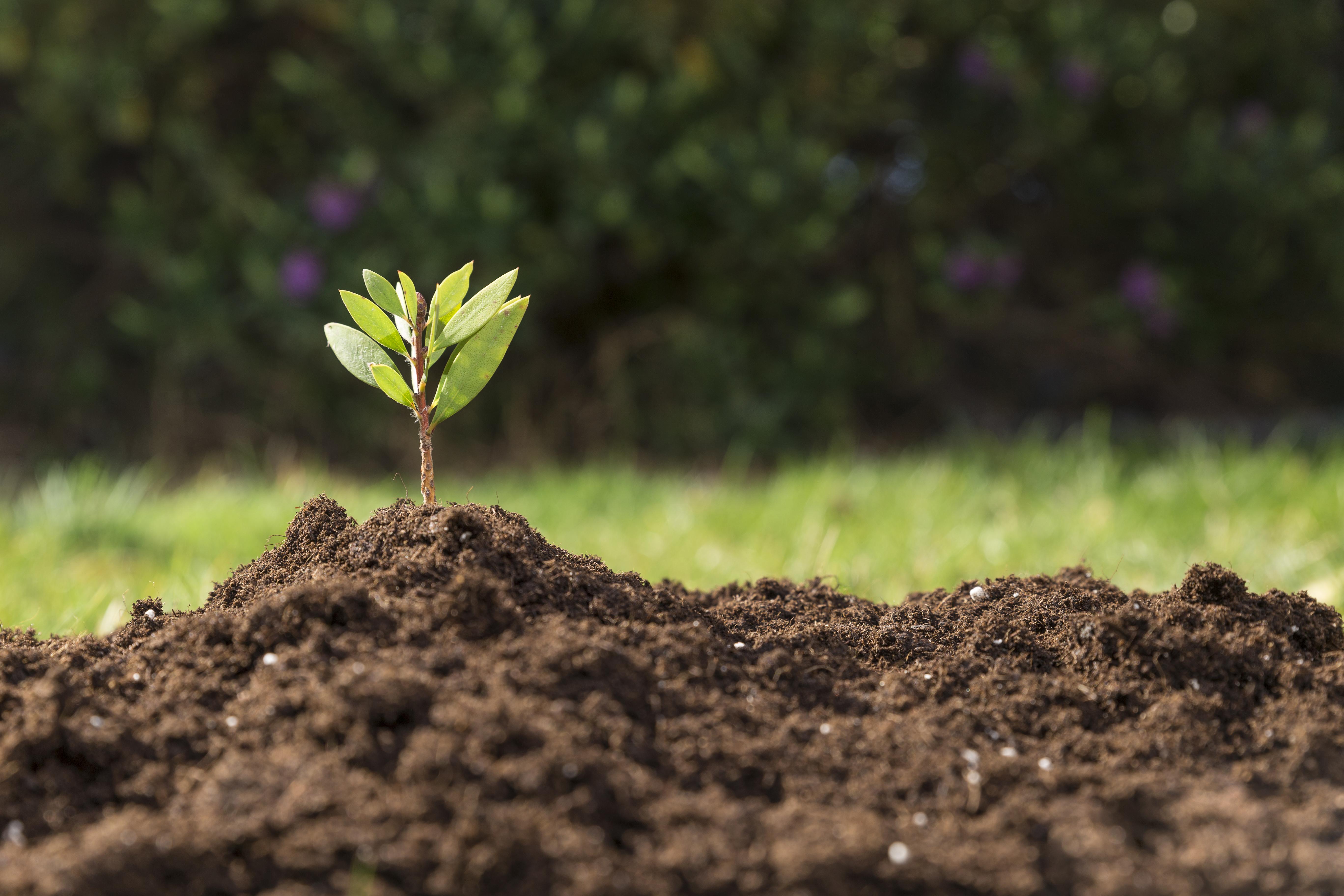 Apostar Por El Medioambiente Podría Generar Millones De Empleos Nuevos
